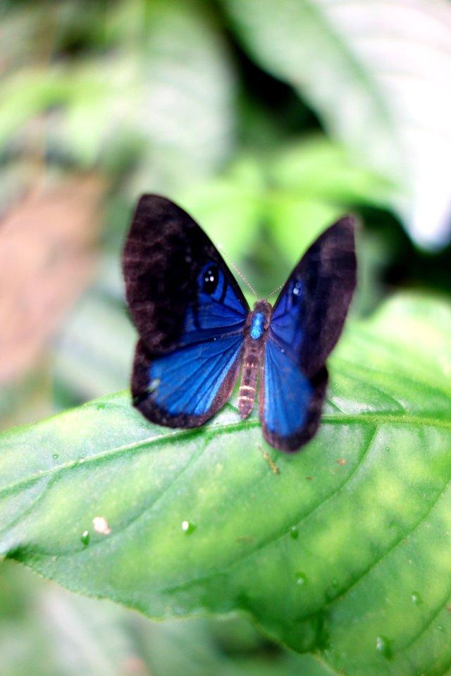 blueeyebutterfly