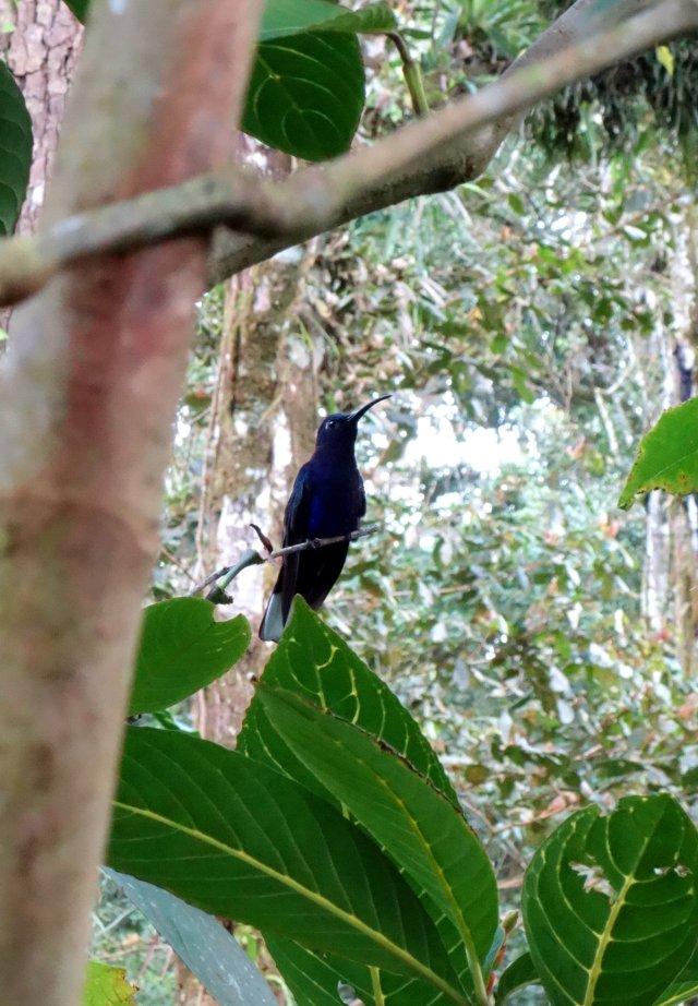 violethummingbird