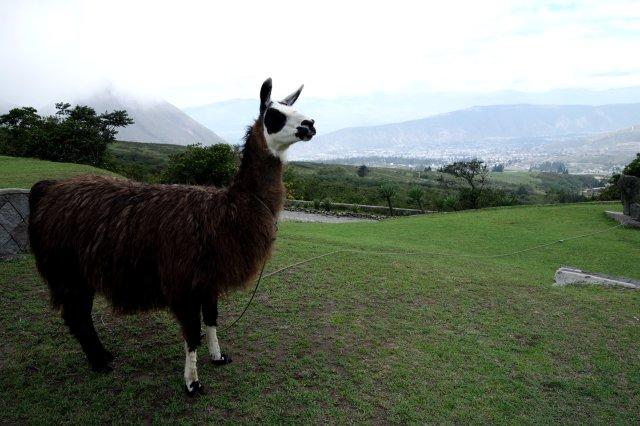 alpacaelcrater