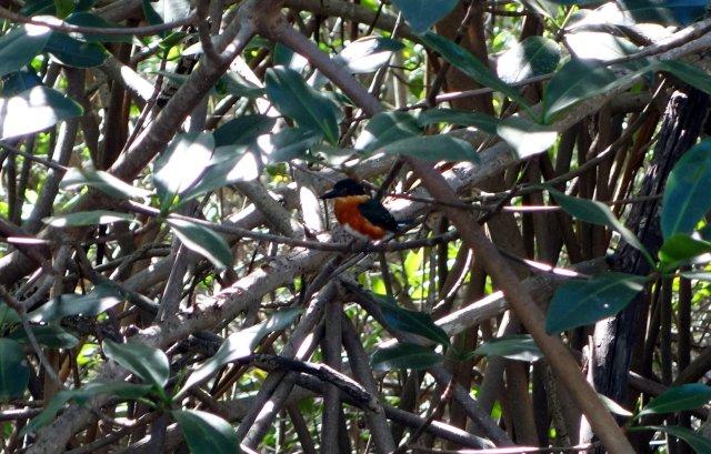 littlekingfisher
