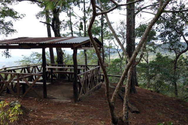 pineforestlookout