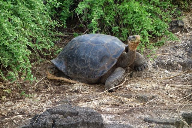 tortoiseincaptivity