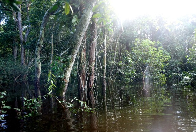 floodedforest