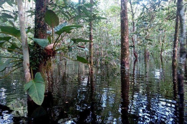 forestloods